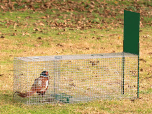 Boîte à fauve avec appât vivant, 127 x 36 x 47 cm, pour renard